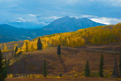 Rays of sunshine  put glow on aspens in Colorado Royalty Free Stock Image