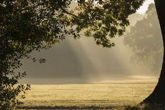 Rays of sunshine on Southampton Common stock image