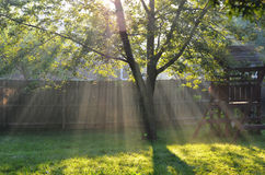 Rays of sunshine stream into a backyard. The sun's rays light up a backyard with a swingset on a beautiful summer morning Royalty Free Stock Images
