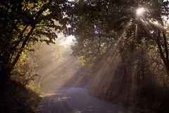 Rays of sunshine. Sunbeams in a forest in Tuscany Stock Images
