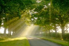 Rays of sunshine through trees. Sunbeams streaming through the foliage of an avenue of beech trees early morning between Sandringham and Anmer. This was taken stock images