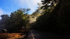rays through trees at local road royalty free stock photo