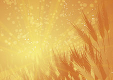 Rays wheat landscape Royalty Free Stock Photography