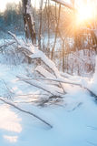 In Rays of the winter sun Royalty Free Stock Images