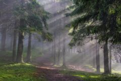 Rays in the wood Royalty Free Stock Photography