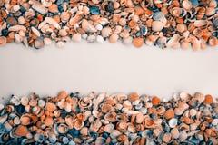 Rayure pour le texte et les coquillages Photo stock
