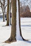 Rayures de neige sur un arbre photos libres de droits