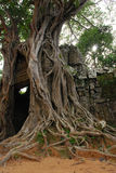 Raíz grande del árbol Foto de archivo libre de regalías