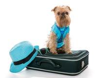 Raza Bruselas Griffon del perro y una maleta del viaje Foto de archivo libre de regalías