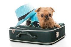 Raza Bruselas Griffon del perro y una maleta del viaje Fotos de archivo