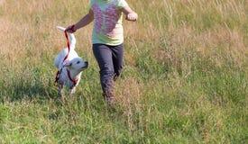 Raza con el pequeño perro Imagen de archivo libre de regalías