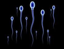 Raza de la esperma Fotos de archivo libres de regalías