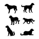 Raza de las siluetas del perro de un vector de St Bernard Foto de archivo libre de regalías