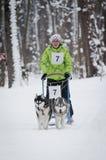 Raza de perro de trineo en Járkov, Ucrania imagenes de archivo