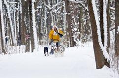 Raza de perro de trineo en Járkov, Ucrania imagen de archivo libre de regalías