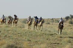 Raza del camello fotografía de archivo libre de regalías