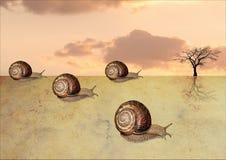 Raza del desierto de los caracoles Fotos de archivo libres de regalías