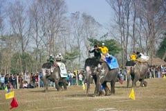Raza del elefante - festival del elefante, Chitwan 2013, Nepal Imagen de archivo