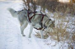 Raza del perro Imagenes de archivo