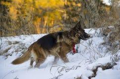 Raza del perro Imágenes de archivo libres de regalías