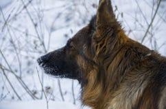 Raza del perro Foto de archivo