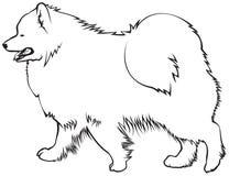 Raza del perro del samoyedo ilustración del vector