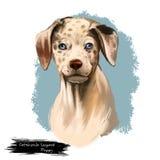 Raza del perro del leopardo de Catahoula aislada en el ejemplo digital blanco del arte Raza americana del perro del Cur de Cataho stock de ilustración