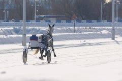 Raza del trotón de Gray Horse en invierno del movimiento Visión posterior Imagen de archivo libre de regalías