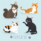 Raza linda de los gatos Imagen de archivo libre de regalías