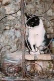 Raza mezclada Cat Outdoor blanco y negro Foto de archivo libre de regalías