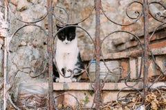 Raza mezclada Cat Outdoor blanco y negro Foto de archivo