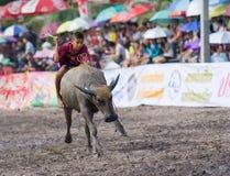 Razas anuales del búfalo en Chonburi 2009 Imagen de archivo libre de regalías