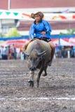 Razas anuales del búfalo en Chonburi 2009 Fotografía de archivo