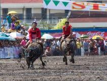 Razas anuales del búfalo en Chonburi 2009 Imágenes de archivo libres de regalías