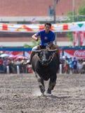 Razas anuales del búfalo en Chonburi 2009 Imagen de archivo