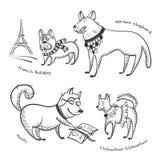 Razas del sistema de los perros Fotos de archivo