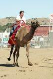 Razas internacionales en la ciudad de Virginia, nanovoltio, los E.E.U.U. del camello Imagen de archivo