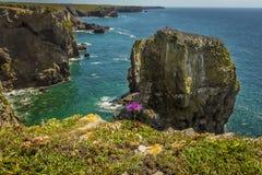 Razerbill在一个小海湾的岩石堆骗在Pembrokeshire海岸,威尔士 库存照片