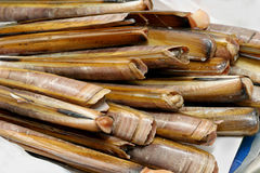Razor clams Stock Photography