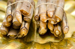 Razor clams. Stock Photo