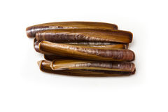 Razor Clams. Raw Razor Clams isolated on a white studio background Royalty Free Stock Images