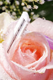 Razor decorated with roses Stock Image