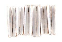 Razor Fish Shells Stock Image