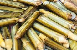 Razor shell fish Stock Photography
