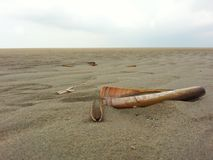 Razor shell Stock Images