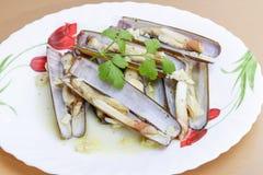 Razor shellfish Stock Images