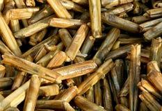 Razor shells. At a fish market in Aegean coast of Turkey Stock Photos