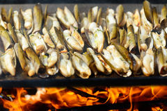Razor shells grill outside Royalty Free Stock Photo