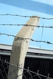 Razor wire Stock Photography