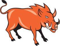 Razorback Head Charge Cartoon Royalty Free Stock Photo